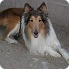 Adopt A Pet :: King