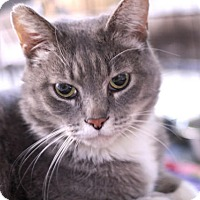 Adopt A Pet :: Graymond - Chicago, IL