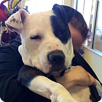 Adopt A Pet :: Petey~ADOPTED! - Raritan, NJ