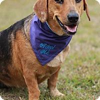 Adopt A Pet :: Tweety - DeRidder, LA