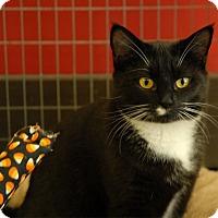 Adopt A Pet :: Carla - Winchendon, MA