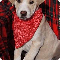 Adopt A Pet :: Mack - Toms River, NJ