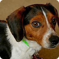 Adopt A Pet :: Skip - Joliet, IL