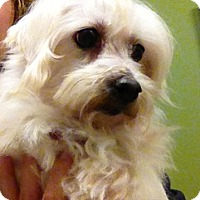 Adopt A Pet :: Karli - Fairview Heights, IL