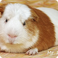Adopt A Pet :: Mr. Piggy - Santa Barbara, CA