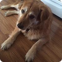 Adopt A Pet :: Ella - Barnegat, NJ