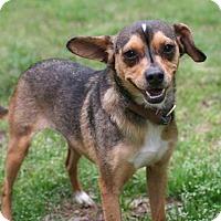 Adopt A Pet :: Sunshine - Little Compton, RI