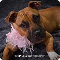 Adopt A Pet :: Sandy - Miami, FL