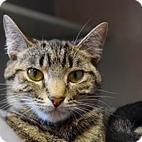 Adopt A Pet :: Thelma - Des Moines, IA