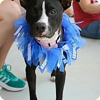 Adopt A Pet :: Zeva - San Antonio, TX
