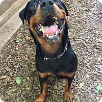Adopt A Pet :: Apoletti - Whitestone, NY