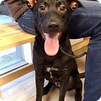 Adopt A Pet :: Bubu - Sunnyvale, CA