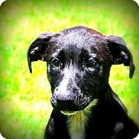 Adopt A Pet :: Sawyer~ meet me! - Glastonbury, CT
