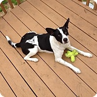 Adopt A Pet :: Moondance - Blountstown, FL