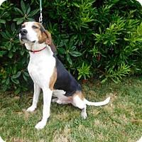 Adopt A Pet :: JED - McKinleyville, CA