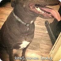 Adopt A Pet :: Sadie - Killeen, TX