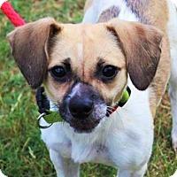 Adopt A Pet :: Kermit (Needs foster/Has application) - Washington, DC