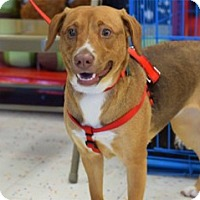 Adopt A Pet :: Trixie - Memphis, TN