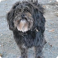 Adopt A Pet :: Ranger - Chester Springs, PA