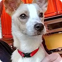 Adopt A Pet :: Wizzle - Poughkeepsie, NY