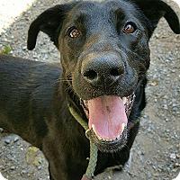 Adopt A Pet :: Daisy - Pottsville, PA