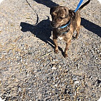 Adopt A Pet :: Speedy - Unionville, PA