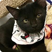 Adopt A Pet :: Gus - St. Louis, MO