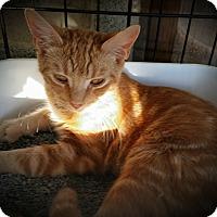 Adopt A Pet :: Keith - Fairborn, OH