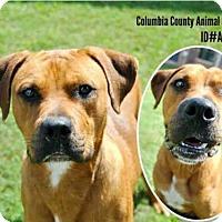 Adopt A Pet :: A076889 - Grovetown, GA