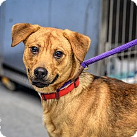 Adopt A Pet :: Taz - Martinsville, IN