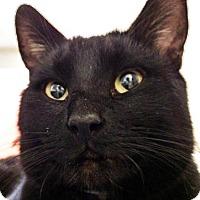Adopt A Pet :: Blake - Prescott, AZ