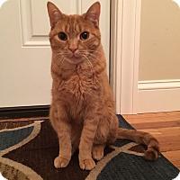 Adopt A Pet :: Bailey - Plainville, CT