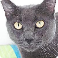 Adopt A Pet :: Rasputin - El Cajon, CA