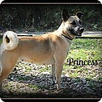 Adopt A Pet :: Princess - Vancleave, MS