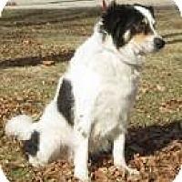 Adopt A Pet :: Diego - Phelan, CA