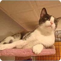 Adopt A Pet :: Bowie - Muncie, IN