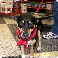 Adopt A Pet :: Zeppo - Scottsdale, AZ