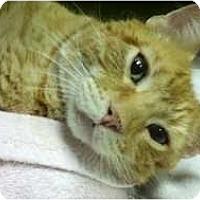 Adopt A Pet :: Sherbert - Richboro, PA