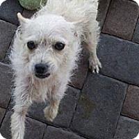Adopt A Pet :: Tomatoes - Scottsdale, AZ