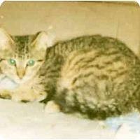 Adopt A Pet :: Lenny (MP) - Little Falls, NJ