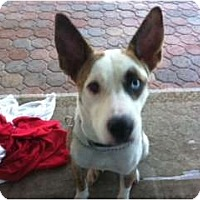 Adopt A Pet :: Maggie - Orange Park, FL