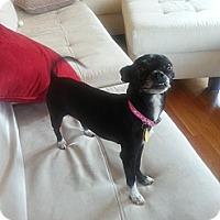 Adopt A Pet :: Jazmine - Dayton OH - Dayton, OH
