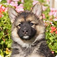 Adopt A Pet :: Joy von Tia - Thousand Oaks, CA