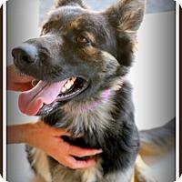 Adopt A Pet :: Urchin - Phoenix, AZ
