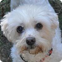 Adopt A Pet :: Buddy - Alpharetta, GA