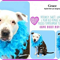 Adopt A Pet :: Grace - Minneola, FL
