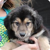 Adopt A Pet :: Maggie - Harmony, Glocester, RI