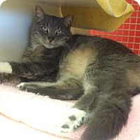 Adopt A Pet :: Angel - Merrifield, VA