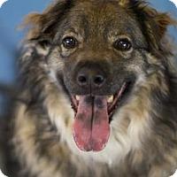 Adopt A Pet :: Romeo - Bradenton, FL