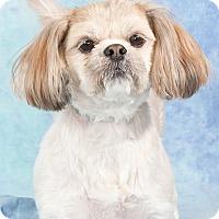 Adopt A Pet :: Jenny - Lansing, MI